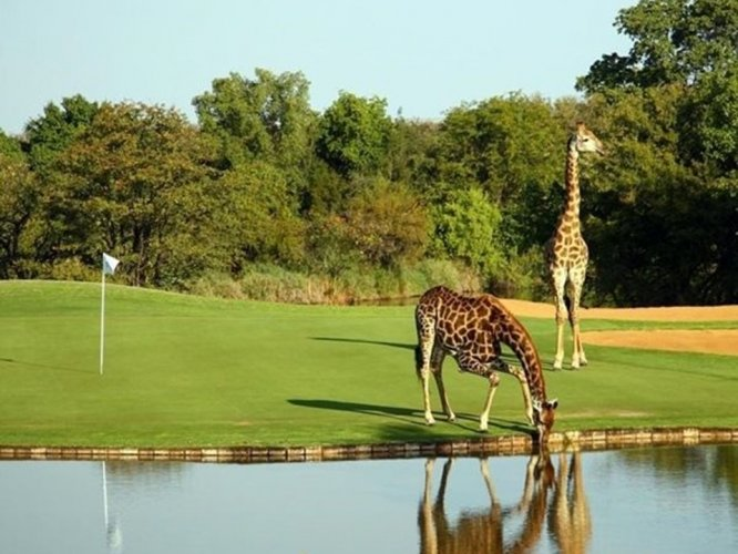 Image of 4 Nights Golfing on the Wild Side